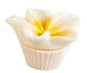 Flower Pot Lip Balm - Plumeria