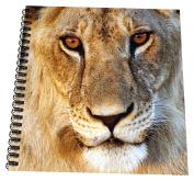 3dRose db_209260_2 Lioness Panthera Leo Portrait Tarangire NP Northern Tanzania Memory Book, 30cm x 30cm