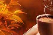 Hot Chocolate Cocoa Candle Soap Home Fragrance Oil 30ml