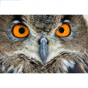 5D DIY Diamond Painting,NACOLA Rhinestone Pictures Of Crystals Embroidery Kits Arts Crafts & Sewing Cross Stitch-Owl
