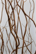 Richland Natural Curly Willow Branches 0.9m - 1.2m Bundle