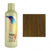 NN7 (7NN)