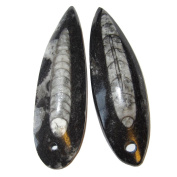 Fossil Amulet 02 Pair of Black White Orthoceras Mini Wand Stone Crystals Bead Pendant Energy Stone 5.1cm