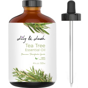Lily & Lush XL Bottle Natural Tea Tree Essential Oil | Undiluted, Therapeutic Grade | The Superior Choice for All Natural Acne Relief or to Purify, Cleanse & Renew I 120ml w/Glass Dropper