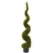 1.2m Mohlenbechia Spiral Tree