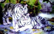 2 White Tigers Lenticular 3D Effect Picture, Ready To Frame, 34 x 24cm
