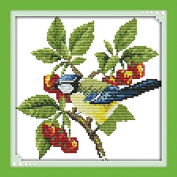 Cross Stitch Embroidery Starter Kit including 14 Count 20cm x 20cm classic reserve Aida coloured threads and tools Little Bird and Fruits
