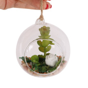 Shiningup Clear Glass Hanging Holder with Lifelike Mini Artificial Fleshy Cactus Plant Real Touch Palm Bonsai Landscape Decorative
