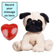 Splodge Recordable Gift Bear- 40cm - Pug Dog - Record a 20 second personal message and send in a bear