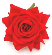 Scarlet Red Open Rose Artificial Hair Flower Clip Buttonhole Corsage by Fabulous Fascinators