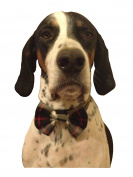 grey tartan elasticated dog bow tie .