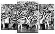 TOP XXL Image on Canvas Picture ZEBRA Herd 3 Parts Art-Nr. AMXL30691 ANIMAL- stretched on real Keilrahmen. Art print wall picture with Frame-Better value than AN oil Painting, Painting Poster with picture frame Giant! Excellent value / MADE IN GERMANY