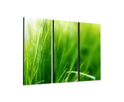 Green Grass Blades 3 x 40 x 90 CM, Three-Piece Wall Picture on Canvas and Stretcher Frame, Ready to Hang-Our Images on Canvas captivate with their unusual formats and extremely detailed print from up to 100 Mega Pixel High Resolution photos.