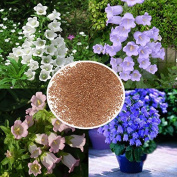 Calli 1200pcs Mixed Colour Canterburybells Seeds Spotted Bellflower Plant