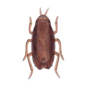 FUNDIY Fake Roaches Fake Animal Toys Prank Novelty Cockroach Bugs Look Real