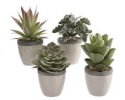 Kaemingk Succulent In Ceramic Pot 8 x 18
