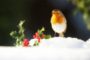 Country Matters Printed Placemat - Bobbin the Robin