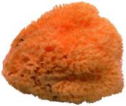 Gerson 20 A Natural Sponge