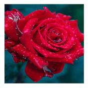 Drip Rose 5D Diamond DIY Painting Kit Home Decor Craft 30 X 30cm