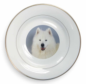 Samoyed Dog Gold Leaf Rim Plate n Gift Box