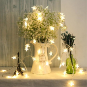 Timewanderer Star Warm White Led String Fairy Light AA Battery Operated Bright LED Lights Decorative Lights Clear Wire for Christmas DIY