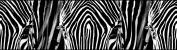 AG Design WB 8205 0 14 x 5 m Self Adhesive Border, Zebra, Sticky Back Plastic Self Adhesive Colourful 500 x 14 cm