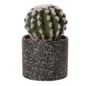 Living & Co Urban Collective Cactus Succulent Dark Terrazzo