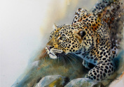 Country Matters Printed Placemat - Stalking Leopard