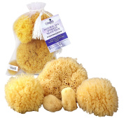 Constantia Beauty Natural Sea Sponges 5pc Multi Pack the Perfect Spa Gift Set to Pamper Mums, Brides, Girlfriends, Teens; Gentle, Hypoallergenic, Great for Bath, Shower & Facial Cleansing