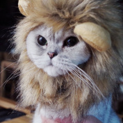 Bello Luna Lion Hair Headgear for Small Dog and Cats,Lion Mane Wig Puppy Cosplay Costume for Halloween Christmas Easter Festival Party Activity