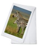 Zebra & Baby - Lantern Press Photography