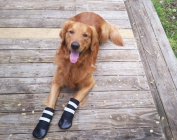 All Weather Neoprene Paw Protector Dog Boots with Reflective Hook and loop Straps in 5 Sizes!