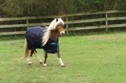 Horseware Amigo Bravo Pony Turnout Sheet 54