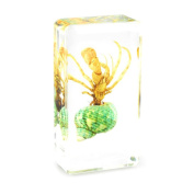 QTMY Biology Science World Collection of Real Insect Specimen Paperweight for Kids Education Toy