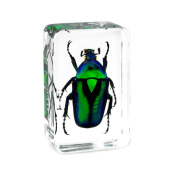 QTMY Insect in Resin Specimen Collection Paperweight for Office Desk,Christmas Gift for Men Biology Science Teacher Kids Education Toy
