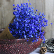 Hot Sale!!!! Gypsophila Natural Dried Flower Baby's Breath Home Decor Dried Flower Sky Star Gift