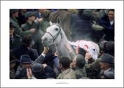 Desert Orchid 1999 Cheltenham Gold Cup Horse Racing Photo Memorabilia