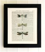 FRAMED ART PRINT ON OLD ANTIQUE BOOK PAGE - Dragonflies, Vintage