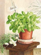 Eurographics VT1053 Fine Art Print Basil In A Clay Pot by Ina van Toor 30 x 40 cm