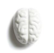 Propaganda Eraser-Brain Eraser, White