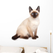 Siamese Cat with Bright Wall Decal by Wallmonkeys Peel and Stick Animal Graphics (90cm W x 70cm H) WM100762