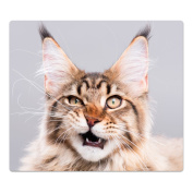 Glass Hob Cover with Dots Decorative Glass Set of 2 Two Piece Straight Cutting Board Splash Guard Design Maine Coon Kitten, Einteilig