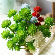 Masterein 200pcs/Bag Houseleek Succulent Seeds Beauty Potted Flowers Seeds for Home Garden