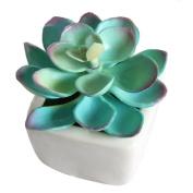 Succulent Plants, Hmane Real Live Potted Succulents Unique Cactus Ceramic Fake Succulents Plant Pot For Desktop Office Decoration -