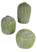 SET OF THREE CLAY CACTUS CANISTERS WITH FLOWER TOPS
