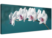 Large Teal Canvas Pictures of White Orchids - Wide Floral Wall Art - 1115 - Wallfillers®