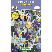 Carnival Dutch Iris Bulb Super Mix 100 Pack