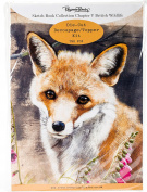 Pollyanna Pickering Sketchbook A4 Die-Cut Decoupage Card Kit-Ch.5 British Wildlife Fox